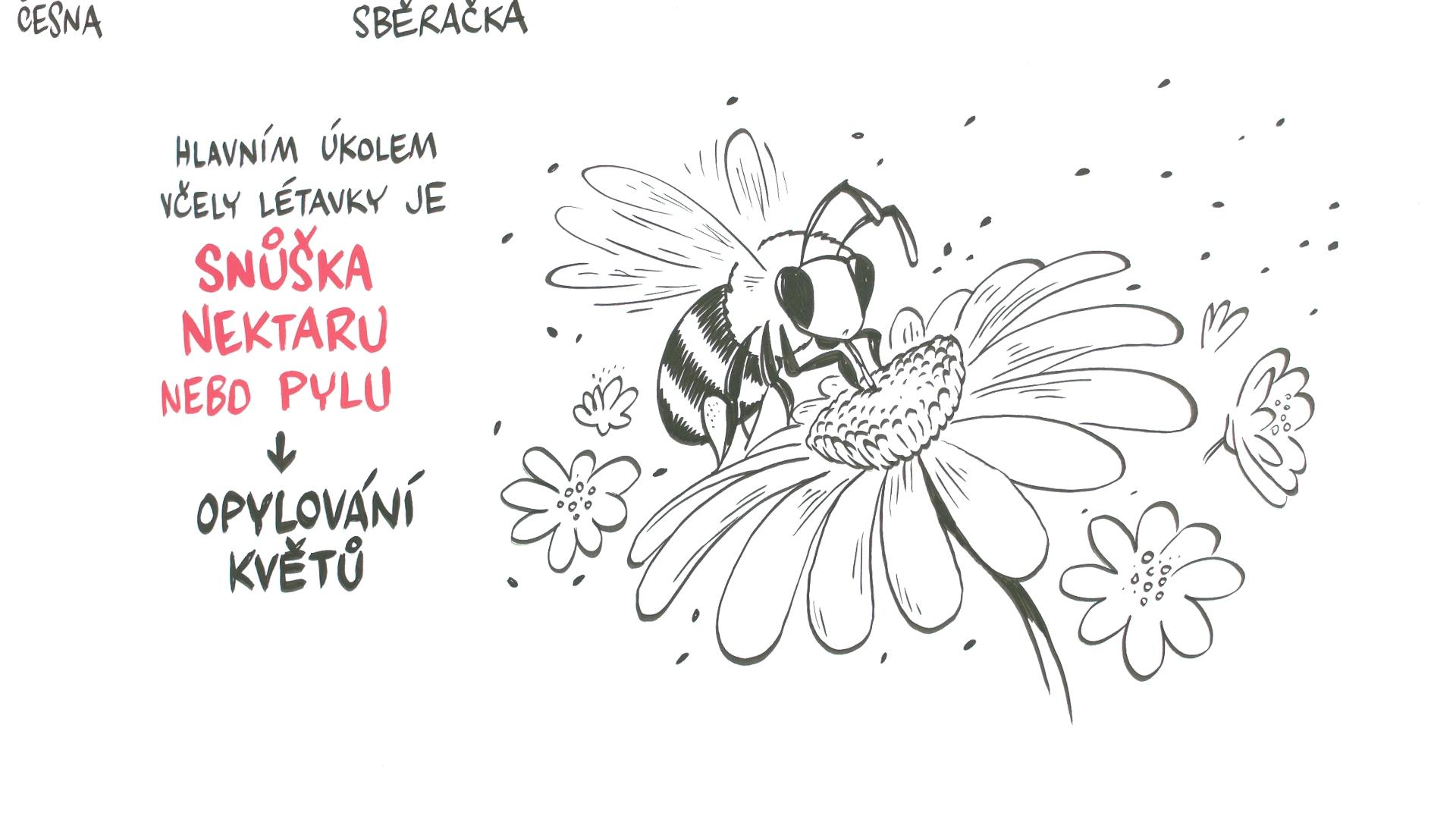 NEZKRESLENA_VEDA_IV_VCELY_006